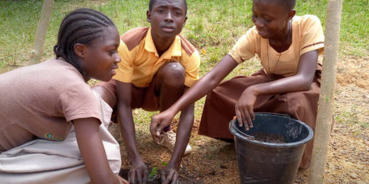 Green Ghana Project: Planting 5 million trees in a day achievable - Ghanaians told