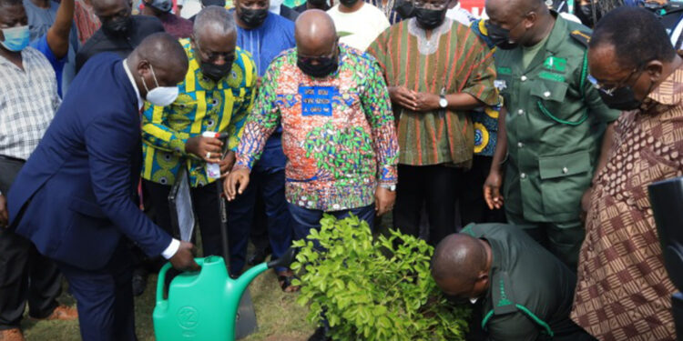 Green Ghana Project: Use same energy to protect existing trees - Minority