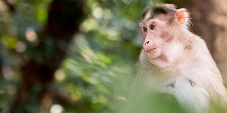 China reports its first death of a human from rare Monkey B virus